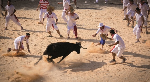 Bayonne Fetes Vaches